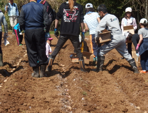 平成31年4月20日「こども教室にてじゃがいもを植え付けました」