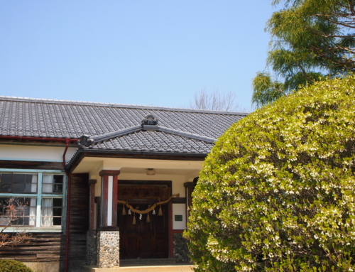令和2年4月29日「杵原学校の大枝垂れ桜の様子」