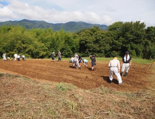 令和2年9月12日 白菜の定植と大根の種まきを行いました